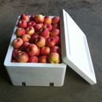 Fruit Box (16)